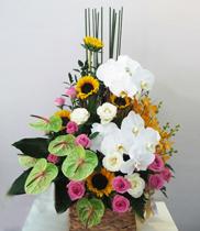 Hoa sinh nhật đẹp, gửi điện hoa Thái Bình
