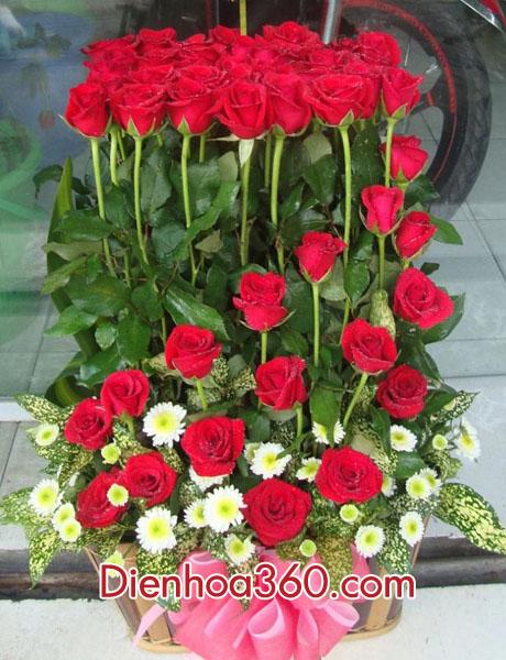hoa-hoa-hong-dep-rose