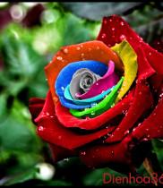 Hoa tươi, ý nghĩa các loài hoa