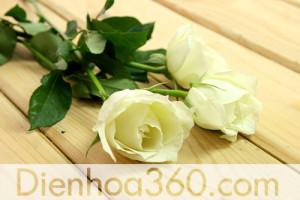 hoa_hong_xanh,hoatuoi,shop hoa tuoi (1)