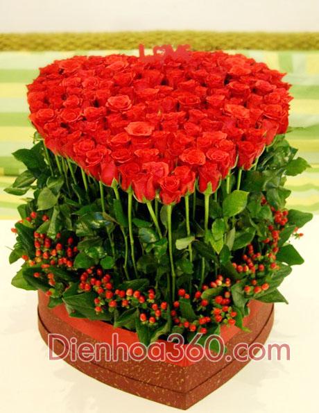 Hoa đẹp, hoa tươi, quà sinh nhật
