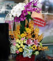 giỏ hoa lan hồ điệp, hoa tươi, shop hoa tươi
