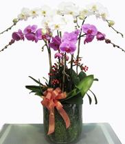 Mua hoa lan hồ điệp rẻ ở dâu