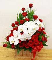 Chúc mừng khai trương – Giỏ hoa lan hồng đỏ