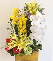 Hoa địa lan-hoa lan hồ điệp, hoa tươi