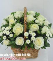 Sự tích và ý nghĩa hoa hồng trắng