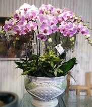 shop hoa tươi quận 9 – mua lan hồ điệp rẻ