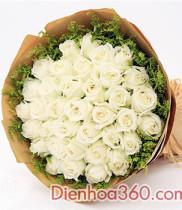 Hoa hồng ý nghĩa màu sắc và số lượng hoa