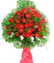 Hoa khai trương giá rẻ, điện hoa giá rẻ, hoa chúc mừng