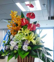 Hoa tặng bạn ngày 0803 – hoa tươi 0803