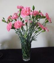 shop hoa, Chuyện tình đẫm nươc mắt của Hoa Mimosa