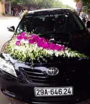 xe hoa cưới lan hồ điệp và lan thái trắng