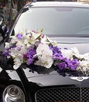 Mau xe hoa dep tai Ha noi – xe hoa lan hồ điệp trắng tím