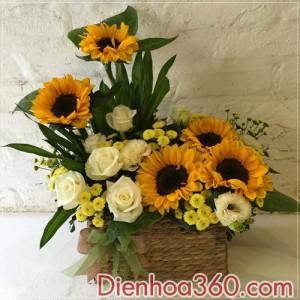 hoa gia re, gio hoa sinh nhat, mau hoa sinh nhat