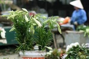 anh dep hoa loa ken (2)