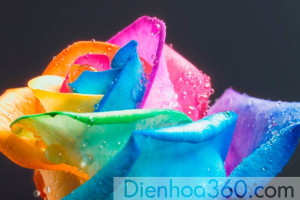 dienhoa360, hoa tuoi (4)