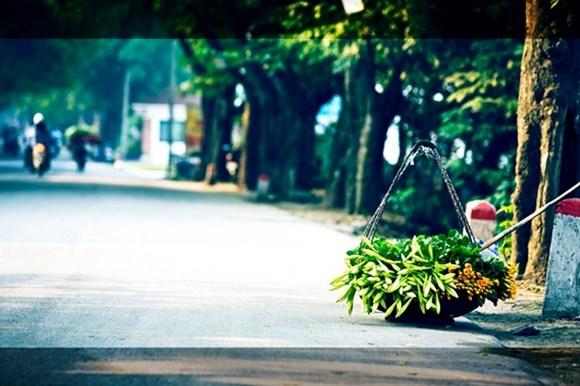 y nghia hoa loa ken (1)