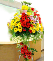 Gửi hoa chúc mừng khai trương-điện hoa