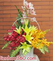 Hoa địa lan loại hoa đẹp hoa tặng sếp ngày sinh nhật