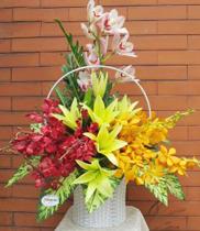 Giỏ hoa địa lan đẹp-hoa sinh nhật sếp