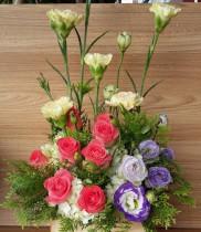 Hoa cẩm chướng-có nên tặng sinh nhật hoa cẩm chướng không
