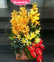 Hoa địa lan-hoa tươi