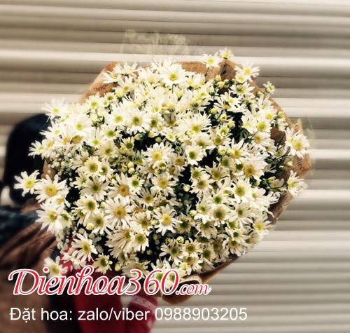 hoa cúc họa mi tím