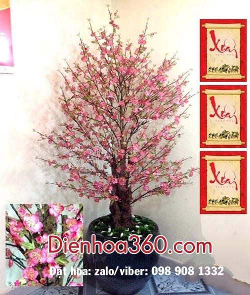 Bán cây đào tết-hoa đào đẹp
