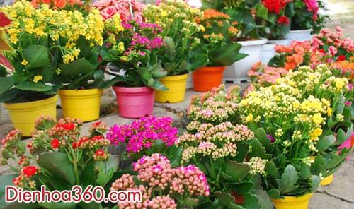 hoa song doi-y nghia cac loai hoa
