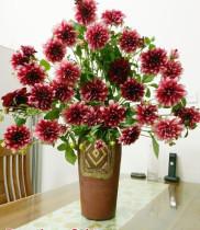 Cách cắm bình hoa tươi ngày tết – hoa thược dược