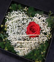 Hộp hoa hồng | hộp hoa tươi | hoa baby