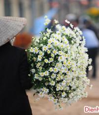 Ý nghĩa và nguồn gốc của hoa cúc dại loài hoa tươi của tháng 4