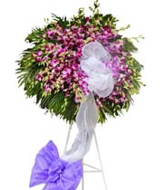 Ý nghĩa và màu sắc của hoa phong lan bạn nên biết