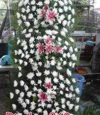 Văn hóa sử dụng hoa chia buồn Hàn Quốc