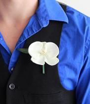 Hoa cài áo cài ngực lan hồ điệp
