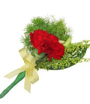 Hoa cài áo hoa cẩm chướng