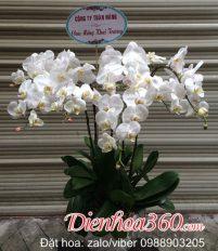 Hoa chúc mừng ngày 20/10, nhà cung cấp dịch vụ hoa tươi ngày phụ nữ Việt Nam