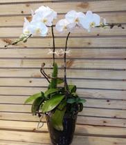 Orchids-lan hồ điệp đẹp