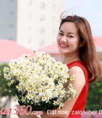 Tổng hợp mẫu hoa cúc hoa mi đẹp