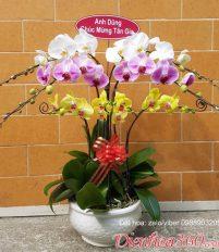 Ý nghĩa các loài hoa 1,ý nghĩa hoa phong lan