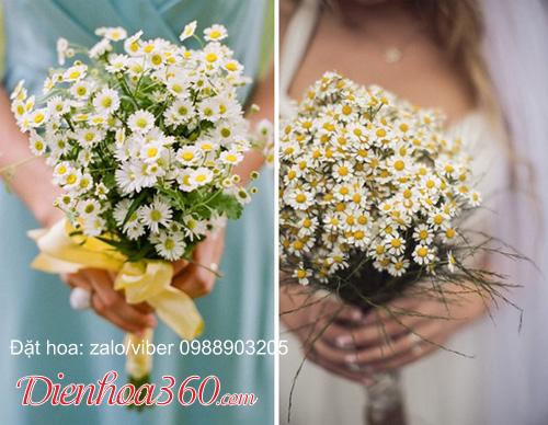 Hoa cúc họa mi trắng