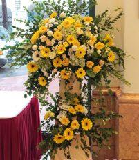 Tặng khai trương nên dùng hoa tươi hay cây văn vòng