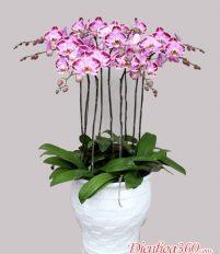 Lựa chọn loài hoa Tết nào đẹp và ý nghĩa cho gia đình bạn?