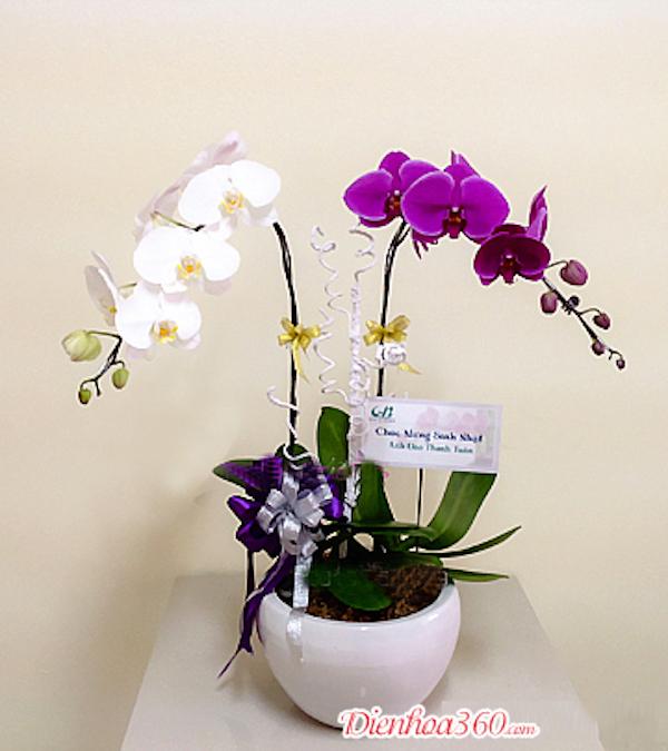 Mách bạn 4 loại hoa treo giỏ được ưa chuộng nhất hiện nay3