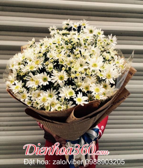 Hoa cúc hoa mi