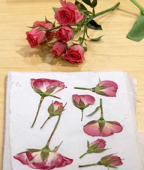 Cách Ép hoa tươi thành hoa khô